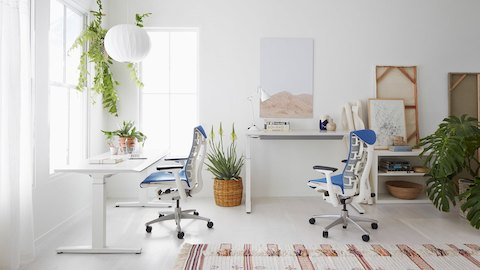 A small office with white walls, hanging plants, and two Embody ergonomic desk chairs with blue upholstery and white frames at sit-to-stand desks.
