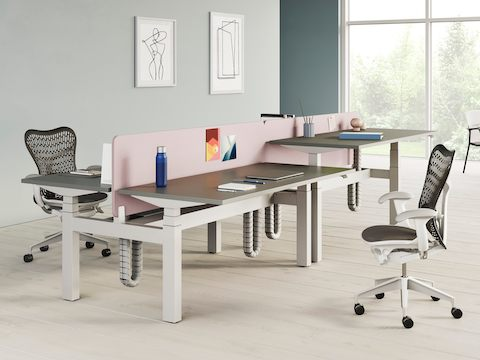 Back-to-back Ratio height-adjustable desks positioned at seated and standing heights and separated by a blue privacy screen.