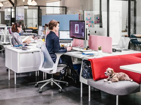 Two people sit at their workstations, as a small dog sits nearby in a chair.