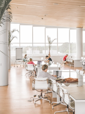 Students study and work inside of a study space full of natural light.