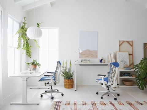 Blue and white Embody Chairs paired with ergonomic Renew Sit-to-Stand Desks, surrounded by plants and office accessories.