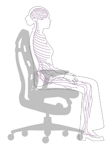 A rough detailing of the nervous system when placed in a seated position.