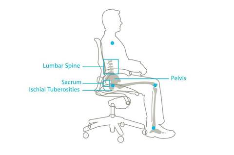 A graphic showing how the Aeron Chair holds the pelvis in its natural position.