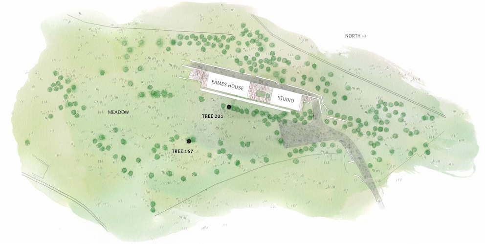 A watercolor map of the Eames House property that indicates the location of the two trees felled and their relationship to the house and studio.
